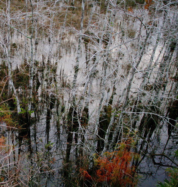 Shapes and lines of the Cypress Swamp