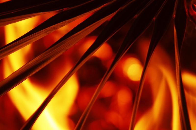 Palmetto Inferno