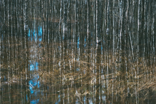 Bare trees reflection in water