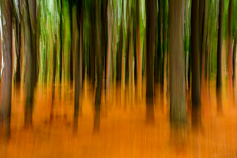 Orange green forest abstract.
