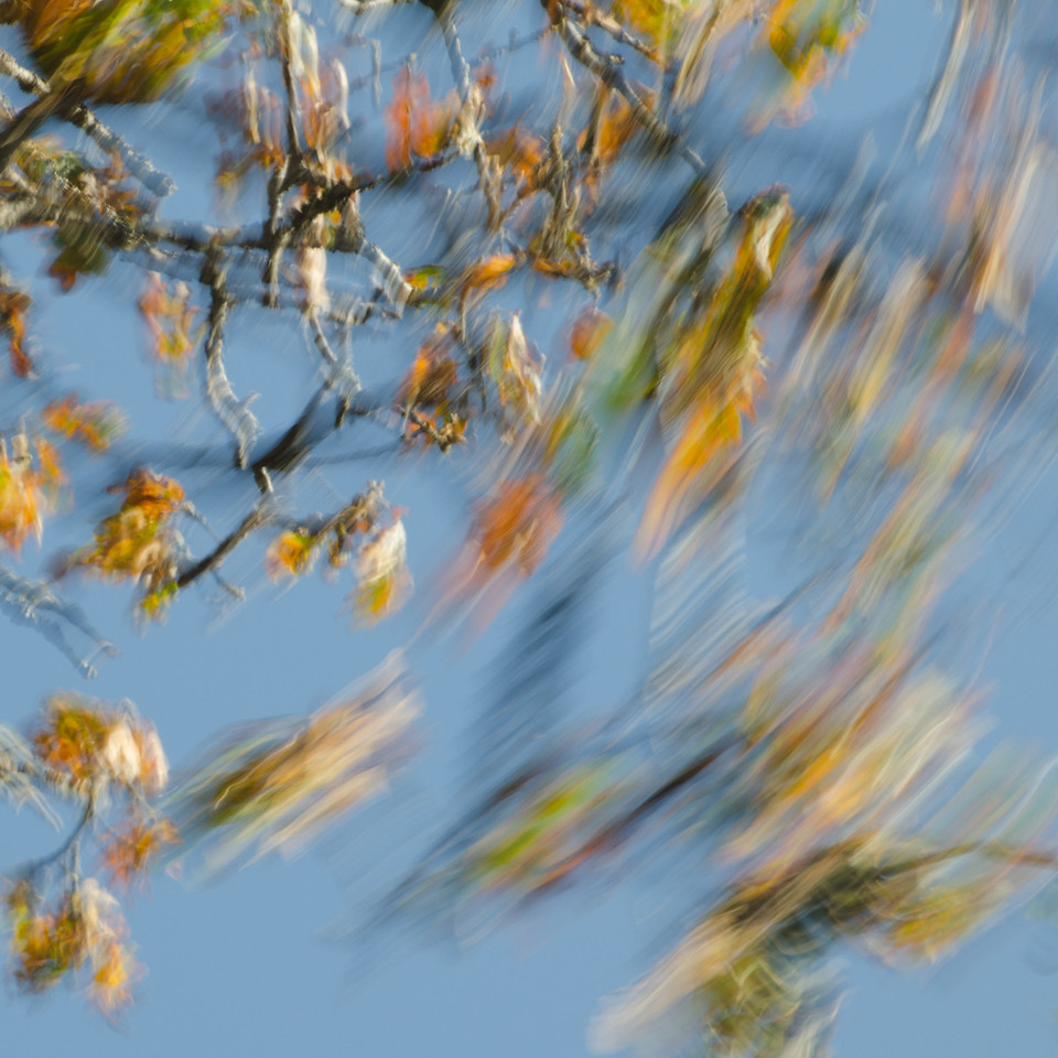 Branches in Motion