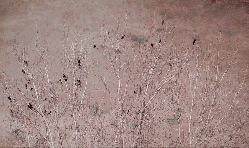 Blackbirds in Tree Abstract