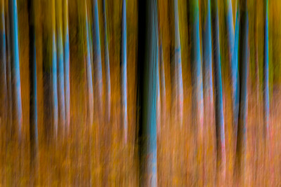 abstract, trees