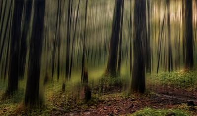 Mystical Forest HDF