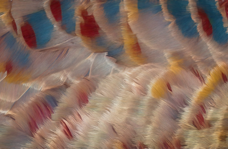 Feather Detail Abstract