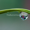 Dewdrop on blade of grass