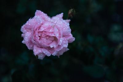 Flower, Macro