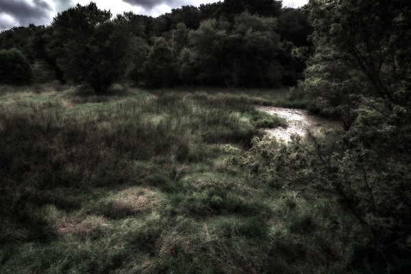 Lazy Wetland