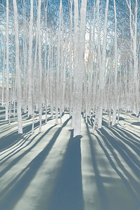 Colorless trees in blue