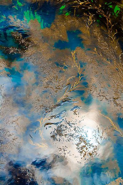 Blue and Gold Kelp Abstract