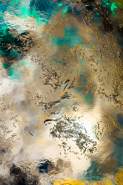 Gold and Green Kelp Abstract
