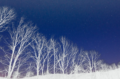 Starry night whiteout trees