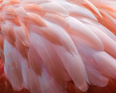 Pink 9341