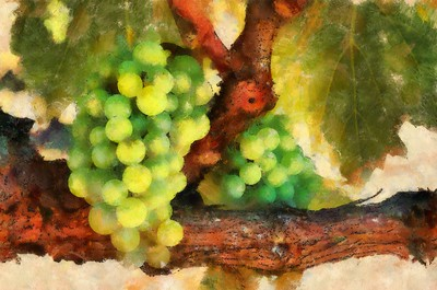 Grapes Kunde Winery 1 - Abstract_DAP_Cezanne
