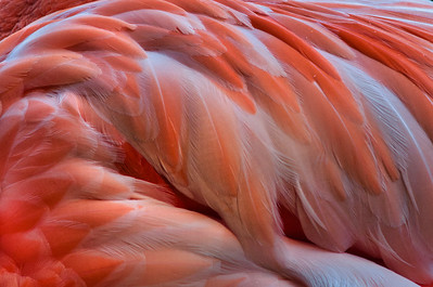 Feathers 887