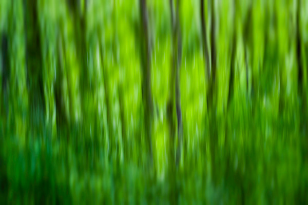 Abstract motion forest.