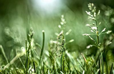 Grass Kiss