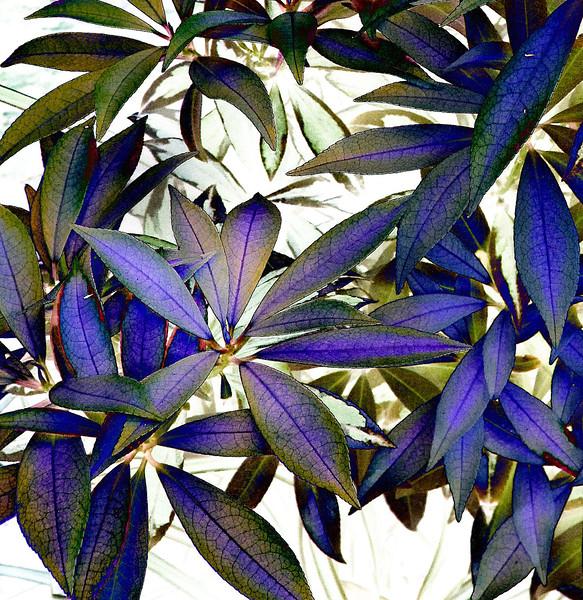 leavesIMG_2122c .jpg