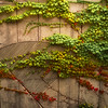 Abstract In Ivy