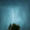 Tree and Cyan Sky