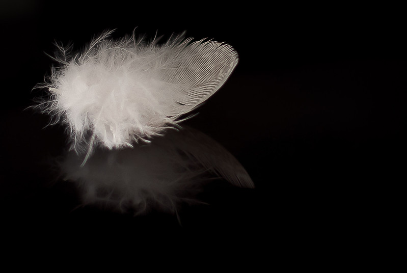 Reflection of a Feather