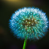 Electric Dandelion