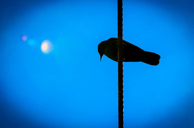 Crow And Orbs