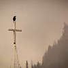 Crow and Cross
