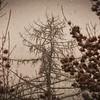 Snow Grunge