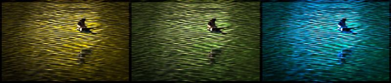 Bird In Blur