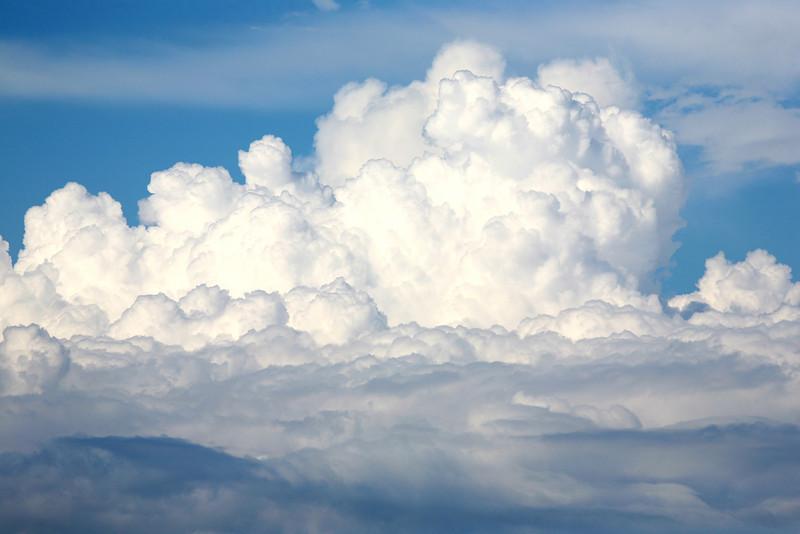 Afternoon Cloud bloom