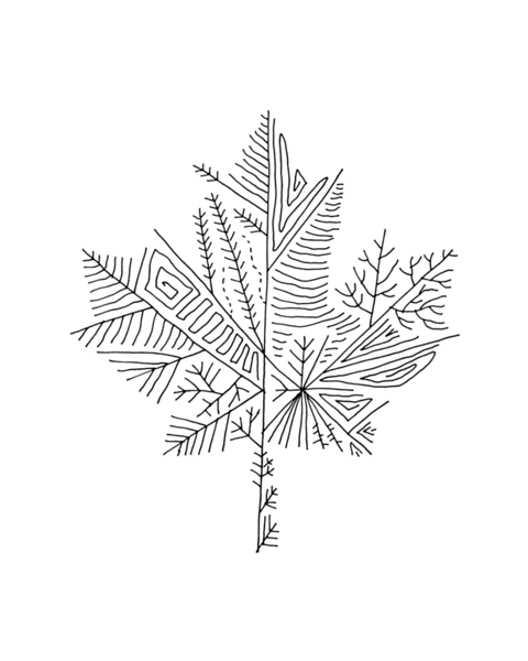 Free Canadian Maple Leaf Colouring Page by Donald Lee
