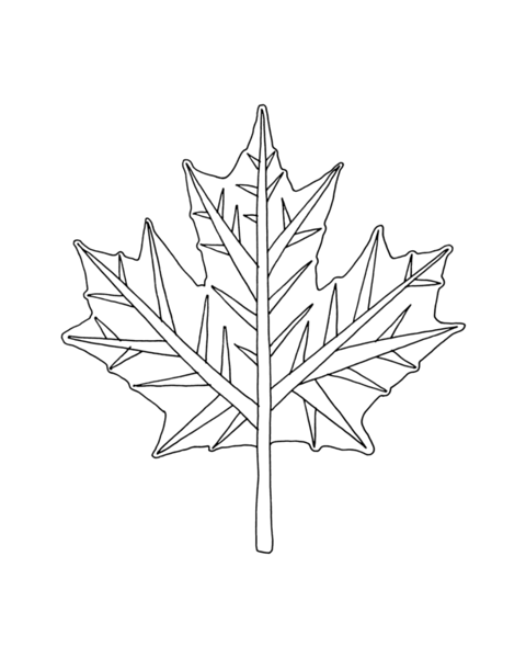 pg5919_1607171847_8x8_canadian_maple_leaf_colouring_page_by_donald_lee