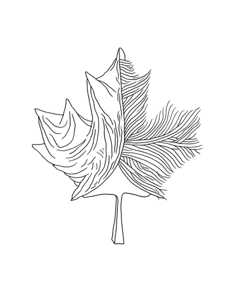 pg5929_1607100951_8x8_canadian_maple_leaf_colouring_page_by_donald_lee
