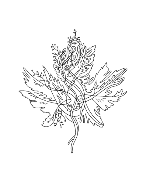 Canadian Maple Leaf Colouring Page with Abstract Drawing in Mind Form by Donald Lee