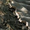 Terre-Neuve (août 2006)