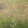 Backlit Morning Meadow