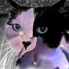 Pansy Cat