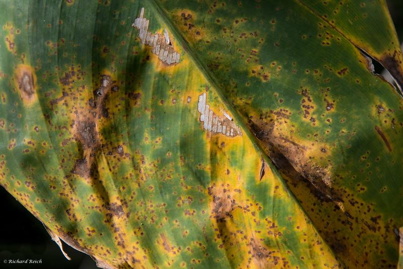 Mottled Leaf - original image