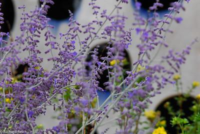 Flower & Dotted Vase, Santa Fe, NM