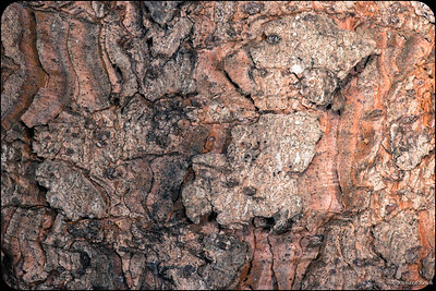Beauty of Bark!