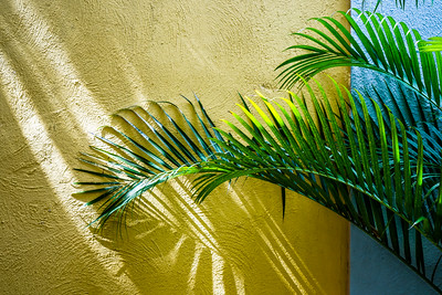 Sun on the Palms in Yellow and Blue