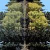 tree of trees ...