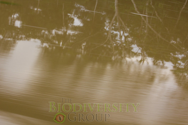 Biodiversity Group, _MG_0847