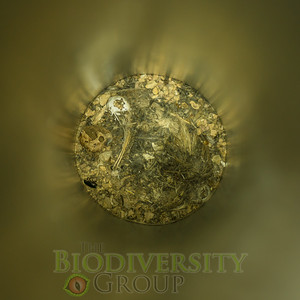 Biodiversity Group, _DSC7897
