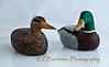 Mallard Decoy Pair...<br /> <br /> Carved, painted and photographed by yours truly...