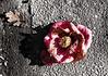Passin Bloom