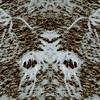 46 - Snowy Wings  : Symmetry Series #16