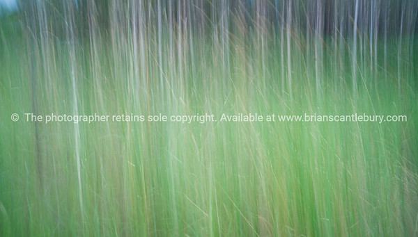 Abstract forest. Green motion blur image, Australian forest is the background, near Yamba. Great images to enhance a modern decor. Colour tones can be altered to better compliment your colour scheme.  Please just email if you have any specific requirements; brian@brianscantlebury.com