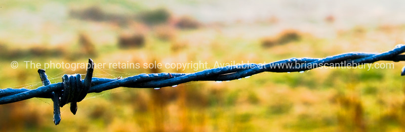 Barbed wire close up.